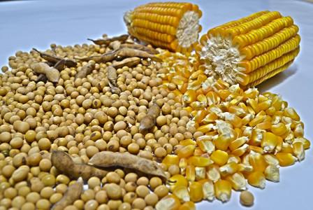 Saca de milho registrou uma média de R$ 34,26, valor que apresenta aumento de 5,7% em relação a janeiro