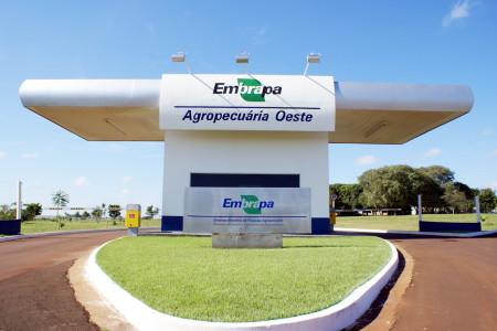 resultados em sistemas de renovação de canaviais, apresentados por pesquisadores da Embrapa Agropecuária Oeste, são referentes a estudos realizados em experimentos em áreas da Usina Sonora