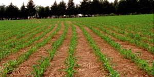 União Europeia aprova a importação de sementes de milho e forrageiras do Brasil