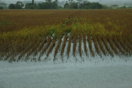 Chuva atrasa e provoca perdas na colheita da soja em Mato Grosso do Sul