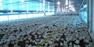 Na Expoagro, Reinaldo reduz ICMS de aviários e irrigação