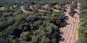 Na semana do meio ambiente parques ganham 240 mil mudas de árvores
