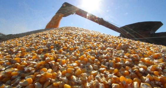 colheita pode sofrer redução de 33%, passando de 9,5 milhões de toneladas, para 6,3 milhões, segundo estimativa da Aprosoja/MS