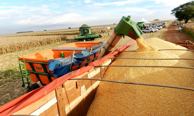 No sul do Estado, 39,3% dos grãos plantados foram colhidos. Essa região compreende as cidades de Antônio João, Bonito, Caarapó, Dourados, Fátima do Sul, Itaporã, Laguna Carapã, Maracaju, Naviraí, Ponta Porã, Vicentina, Amambai, Aral Moreira, Douradina e Juti - (Foto: Famasul)