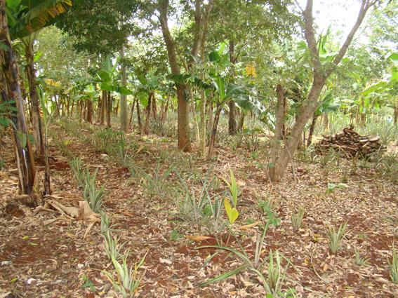 embrapa-agroecologia_por_christiane_comas-3