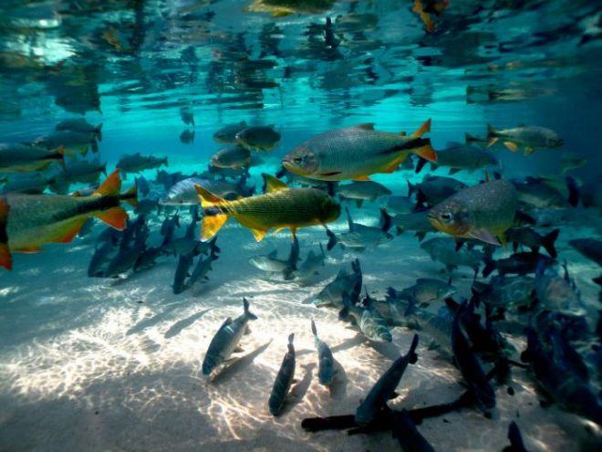 bonito-peixes