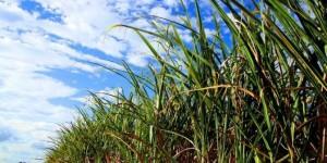 AGRONEGÓCIO SENTE CRISE NO BRASIL E PERDE EMPREGOS, PRODUÇÃO E RECEITA