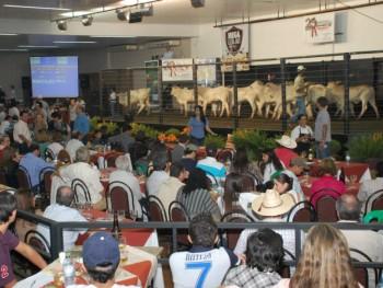 Leilões  na Expoagro são sempre um sucesso. (Foto: Divulgação).