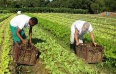 Embrapa faz diagnóstico da horticultura orgânica com reuniões na Grande Dourados