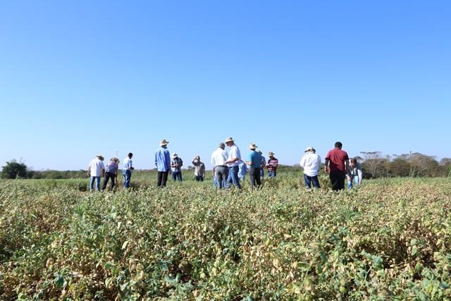 Embrapa Agropecuária Oeste realiza pesquisas com grâo de bico e lentilha. (Foto: Christiane_Comas).