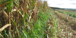 Tecnologia auxilia produtores rurais e traz estabilidade na produção