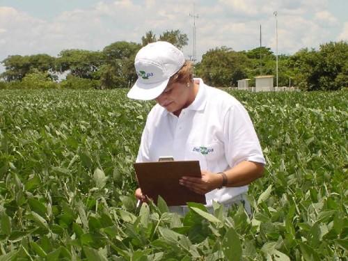 Ao longo das últimas quatro décadas os nossos pesquisadores transformaram os solos brasileiros, que são naturalmente ácidos e pobres, em solos férteis. (Foto Sílvio Ferreira).