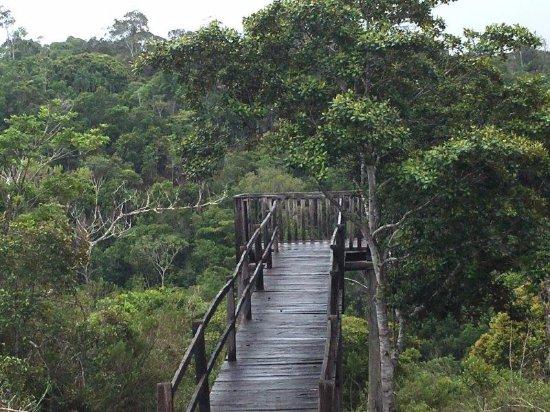 Iniciativa tem como objetivo melhorar a infraestrutura das unidades de conservação administradas pelo ICMBio e deve impulsionar o turismo de natureza. (Foto: Divulgação).