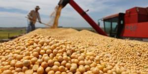 Suspensão de tarifa de importação de soja e milho deve reduzir custo ao produtor