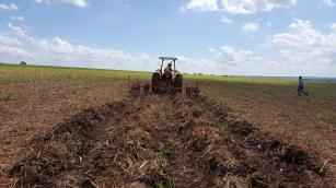 A palhada remanescente, ou seja, o palhiço serve como cobertura do solo, maximizando os benefícios proporcionados pelo aumento do teor de matéria orgânica. (Foto: Divulgação).