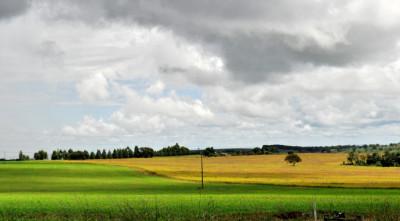 """Plano Safra dá a diretriz para que a gente tenha um recorde na colheita de grãos no próximo ano. """", diz Verruk. (Foto: Kelly Ventorim)."""