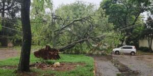 Temporal derruba árvores e causas estragos em Dourados