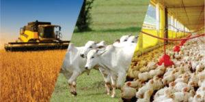 Agropecuária de MS deve aumentar em 25% valor da produção em 2020