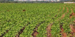 Plantio da soja é concluído com mais da metade da safra comercializada