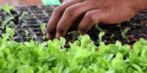 Corte em crédito rural no Orçamento de 2021 ameaça agricultura familiar