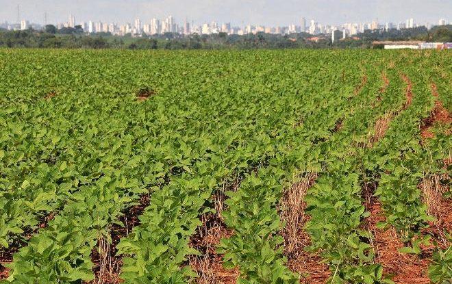 Estudo destaca produtividade da soja plantada com antecedência